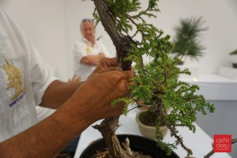 Dennis Makishima isn't a noob when it comes to bonsai.